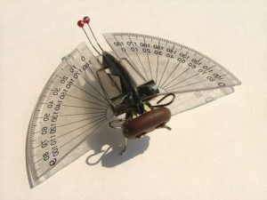 insects model